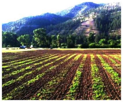 history of the farm missoula grain and vegetable co history of the farm missoula grain