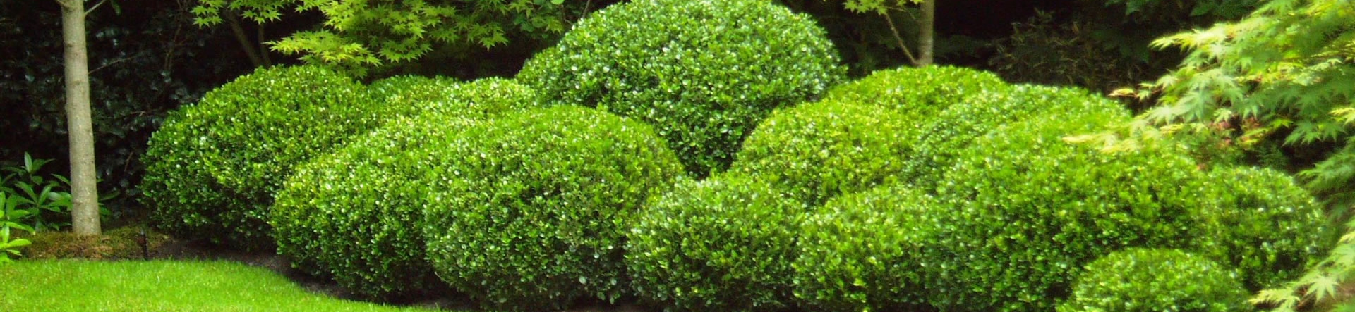 Topiary Cloud Hedging in Box
