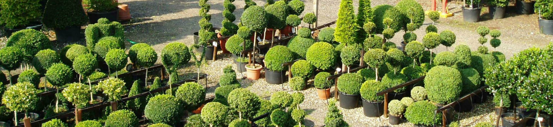 Crown Topiary is the largest topiary nursery in the UK