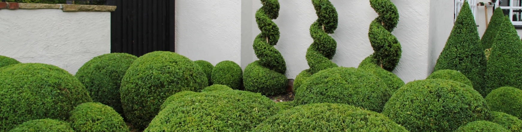Caring for your topiary styles & plants