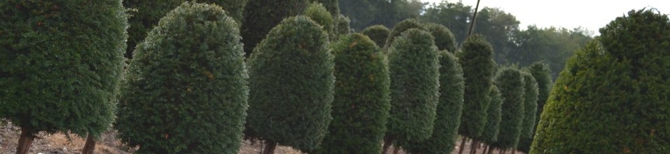 Crown Topiary beehives