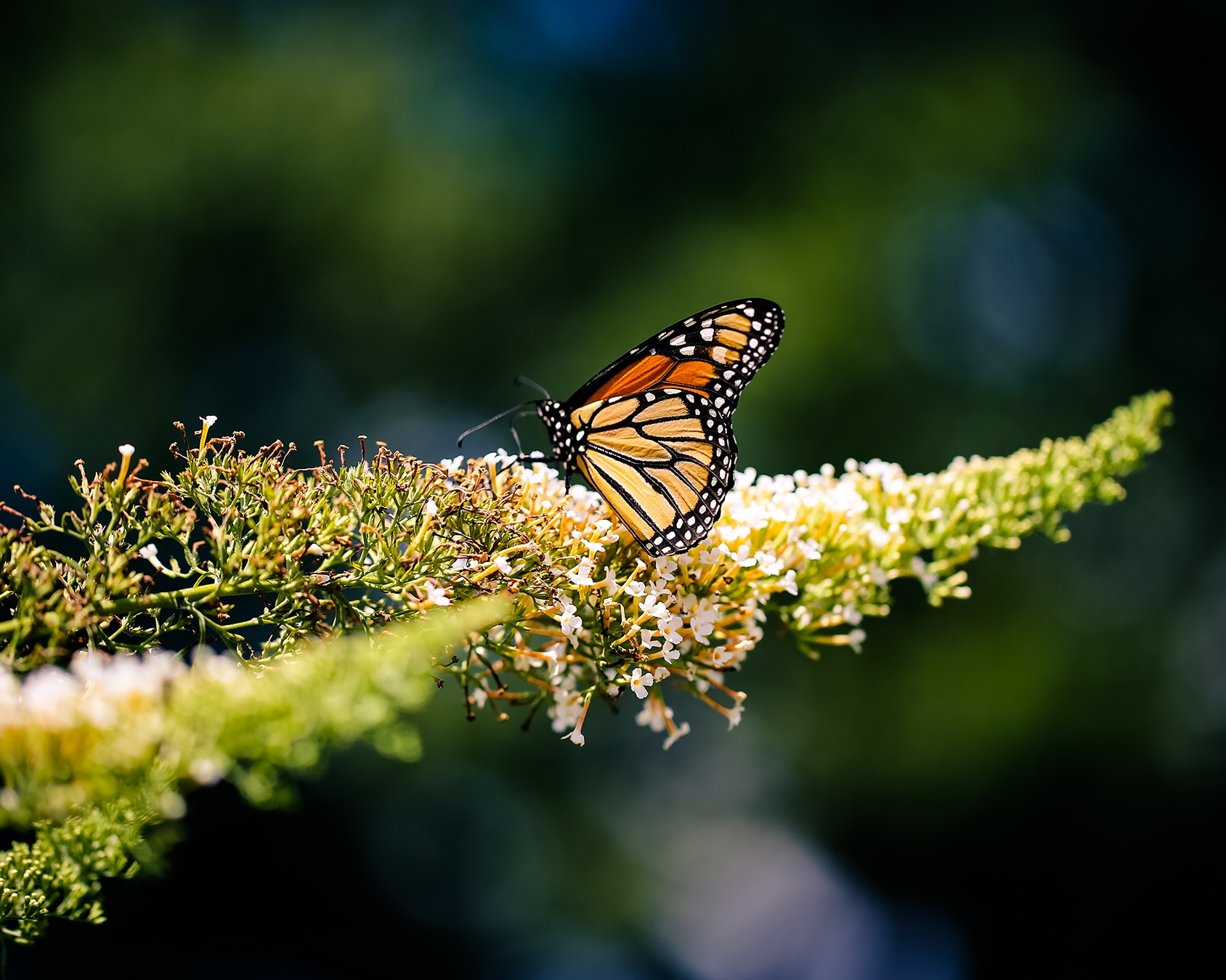 nature-outdoors-butterfly-letsexplore.jpg