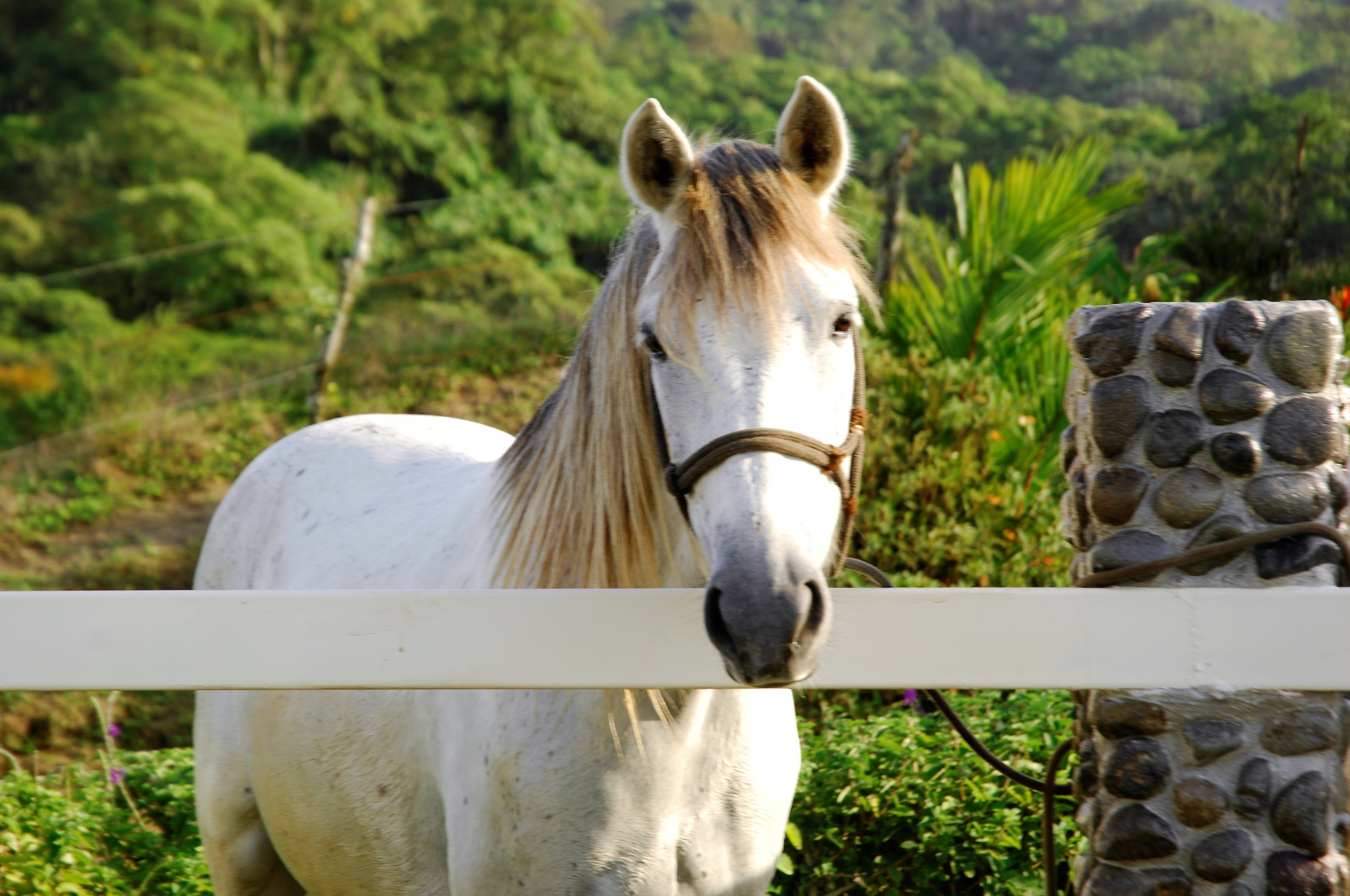 photo of pizzaz for equine family shot.jpg