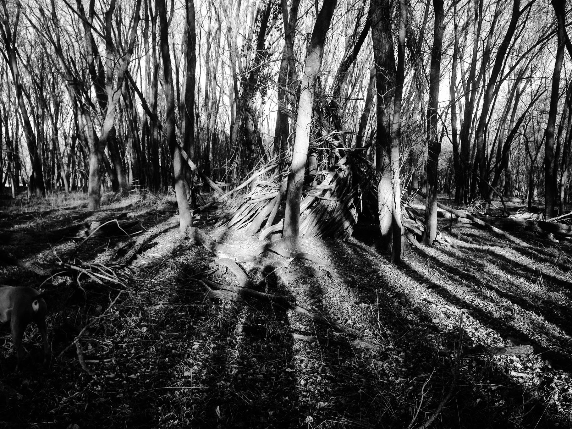 Striped Kingdom