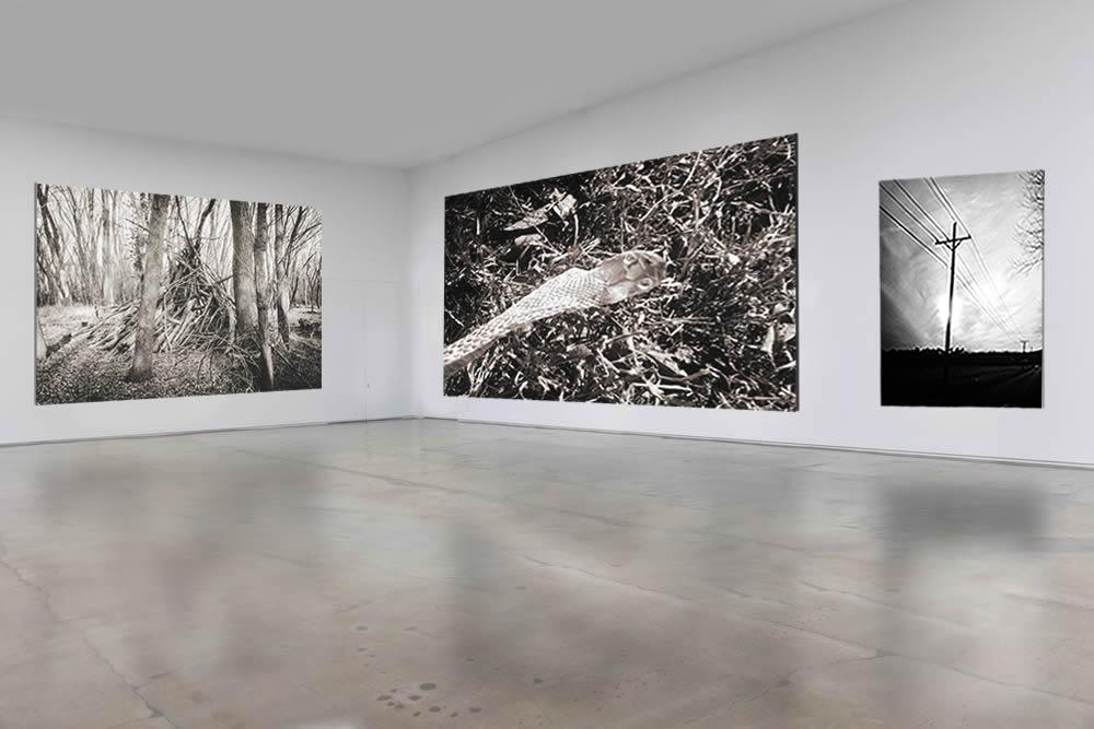 blank gallery forest of my birth 3.jpg