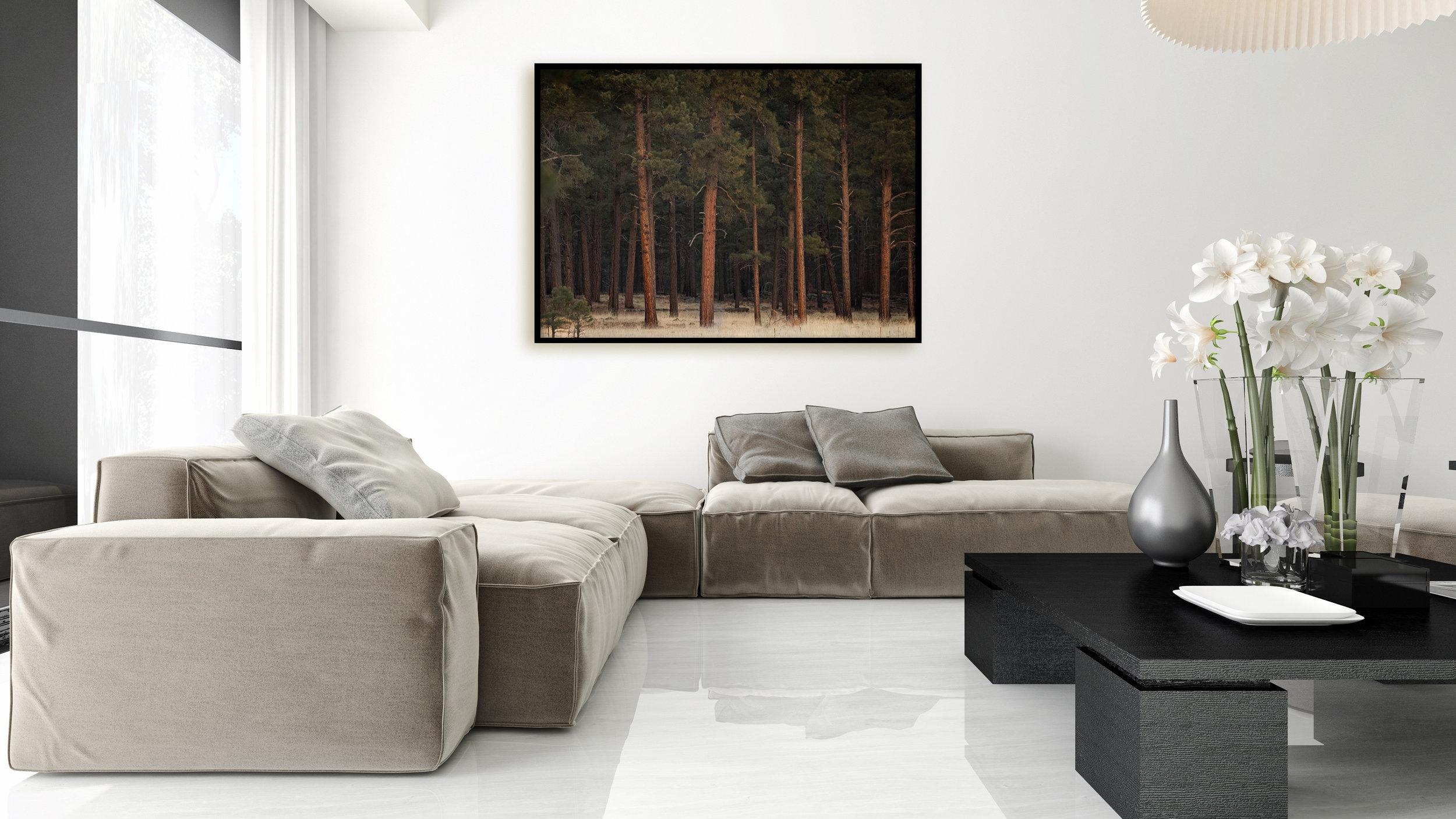 arizona-forest-image.jpg