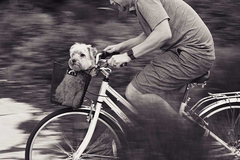 Jamie Sampson  attempted panning for the first time and got this killer image of her husband biking with the dog. It's not easy to get panning right and look how awesome she did.