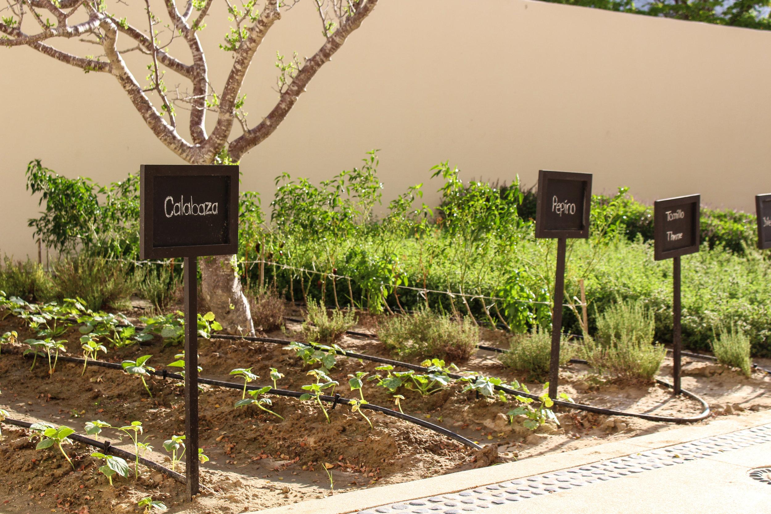 Organic Garden at Pueblo Bonito Pacifica