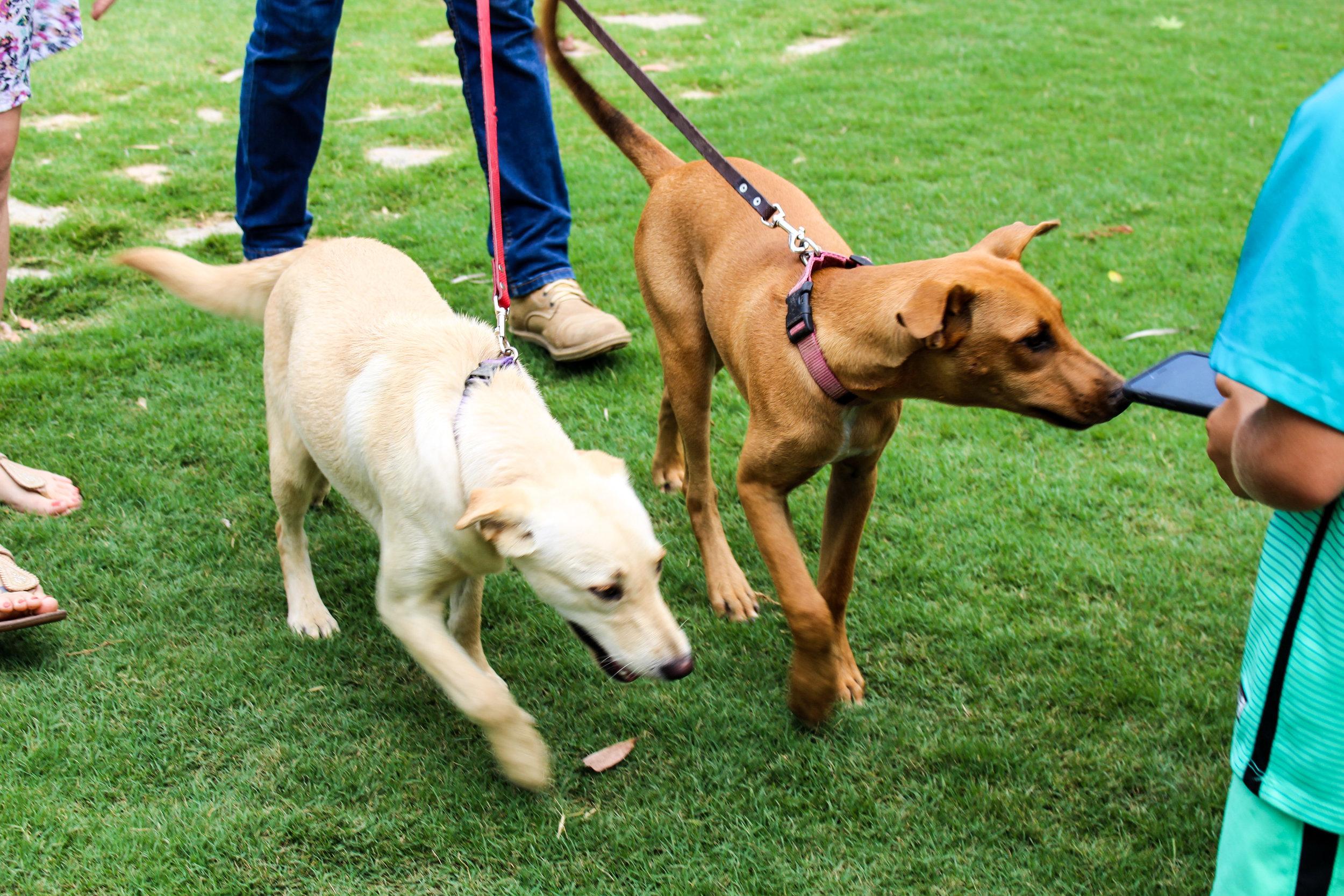 Flora Farms Dogs