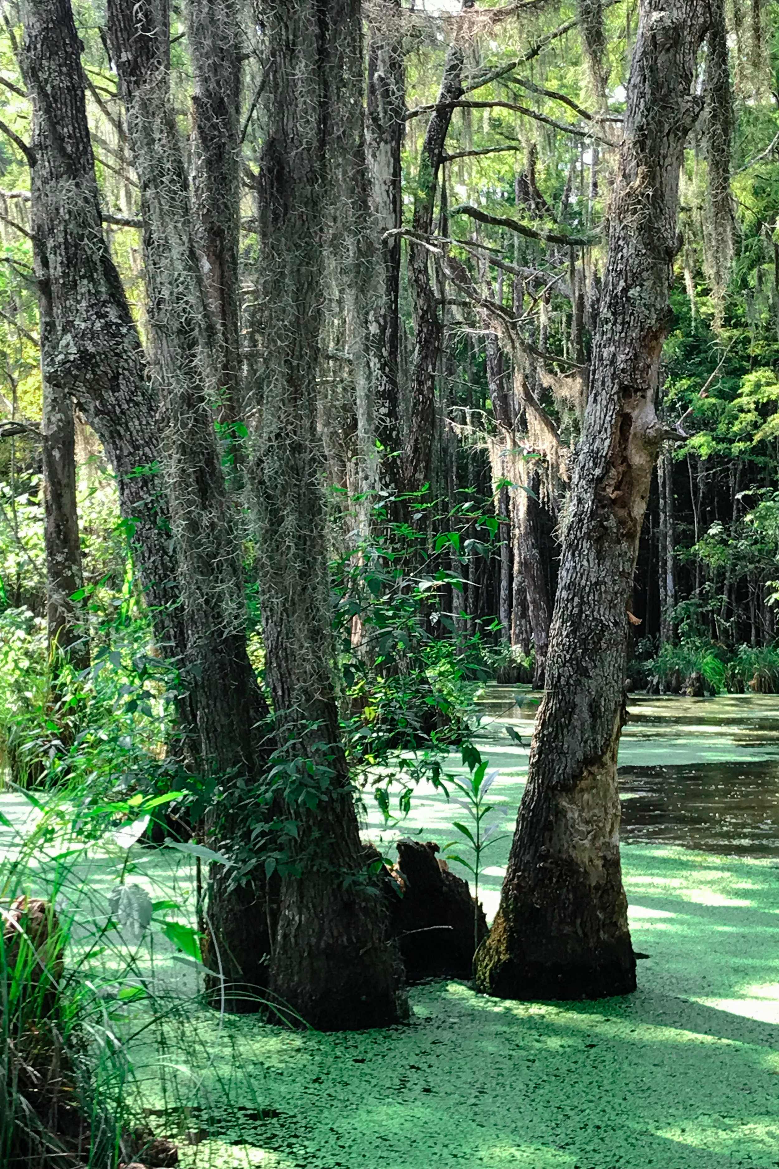 LSS Swamp Tour