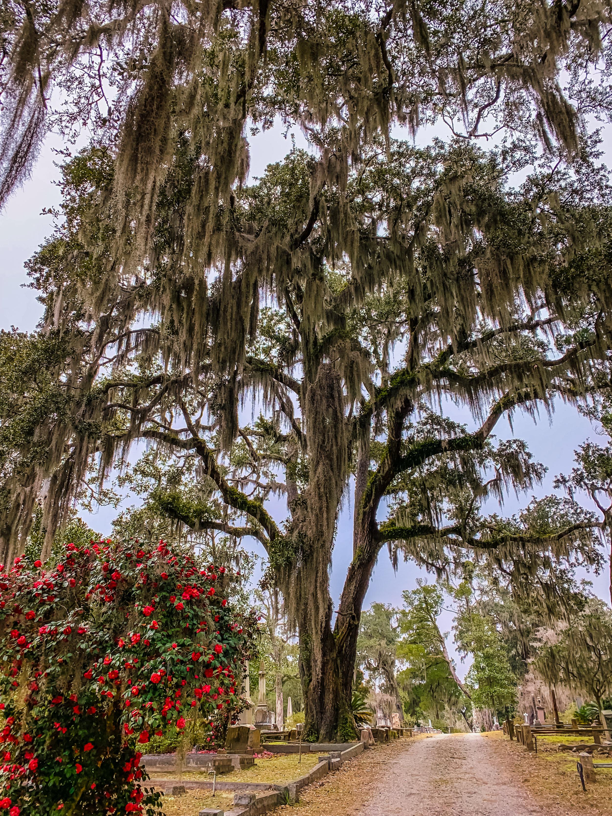 LSS Bonaventure Cemetery Savannah