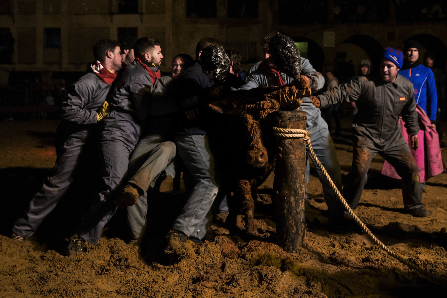 Reveller s  tie  a  bull  to a  stick  in order to set  fire  to the  flammable  balls attached to its  horns  during the ' Toro de Jubilo ' fire bull festival on November 16, 2014 in  Medinaceli , Spain.  Toro de Jubilo , a  Fire Bull festival , is an ancient tradition held annually at midnight in the Spanish town of Medinaceli. The event starts when flammable balls attached to a bull,s horns are set alight. The  animal  is then untied and revellers dodge it until the flammable material is consumed. The body of the animal is covered with mud to protect it from burns.