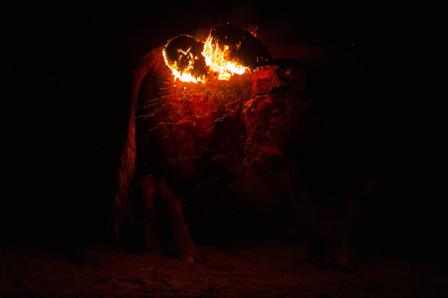 The  bull  turns around during the  'Toro de Jubilo'  fire bull festival on November 16, 2014 in  Medinaceli , Spain.  Toro de Jubilo , a  Fire Bull festival , is an ancient tradition held annually at midnight in the Spanish town of Medinaceli. The event starts when flammable balls attached to a bull,s horns are set alight. The  animal  is then untied and revellers dodge it until the flammable material is consumed. The body of the animal is covered with mud to protect it from burns.