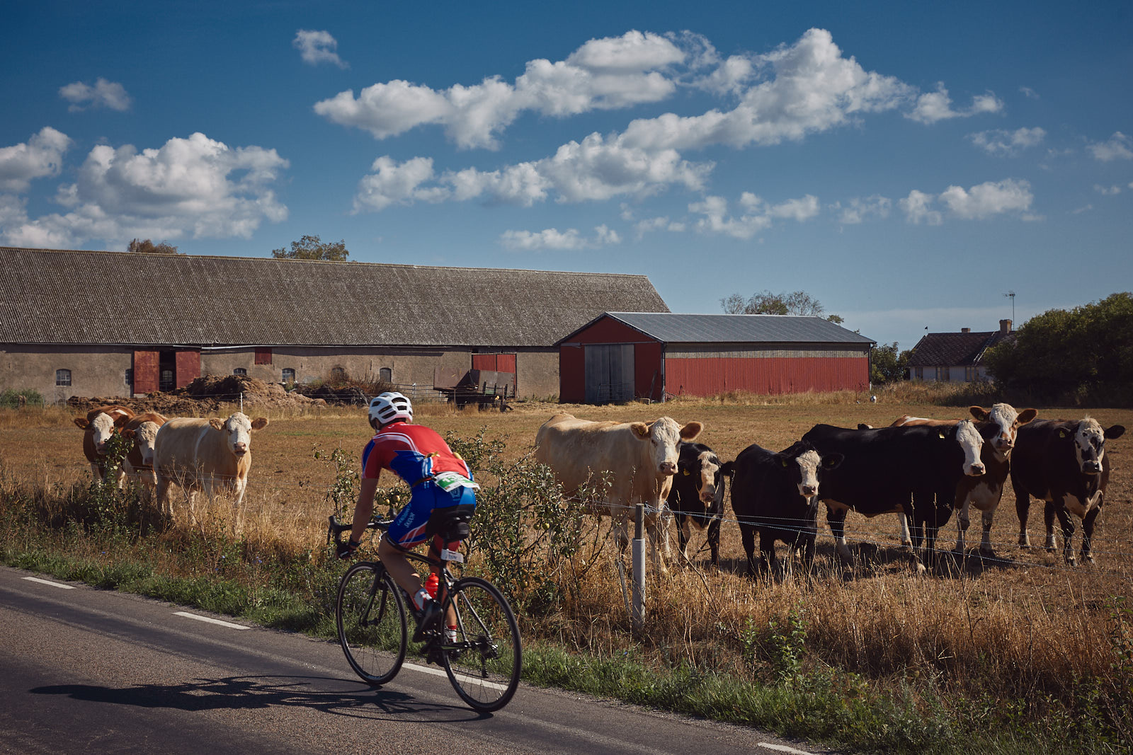 Athletes compete during the biking course of Ironman kalmar on August 18, 2018 in Isle of Oland, Sweden.