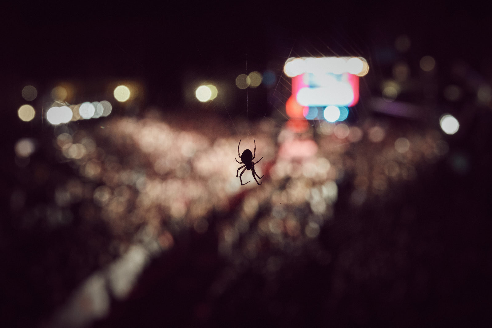 A spider rests on its net as the last athletes arrive to the finish line of the Ironman Kalmar on August 18, 2018 in Kalmar, Sweden.