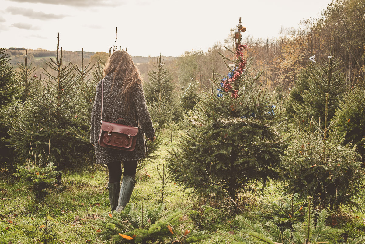 Wilderness Woods, Cut Your Own Christmas Tree