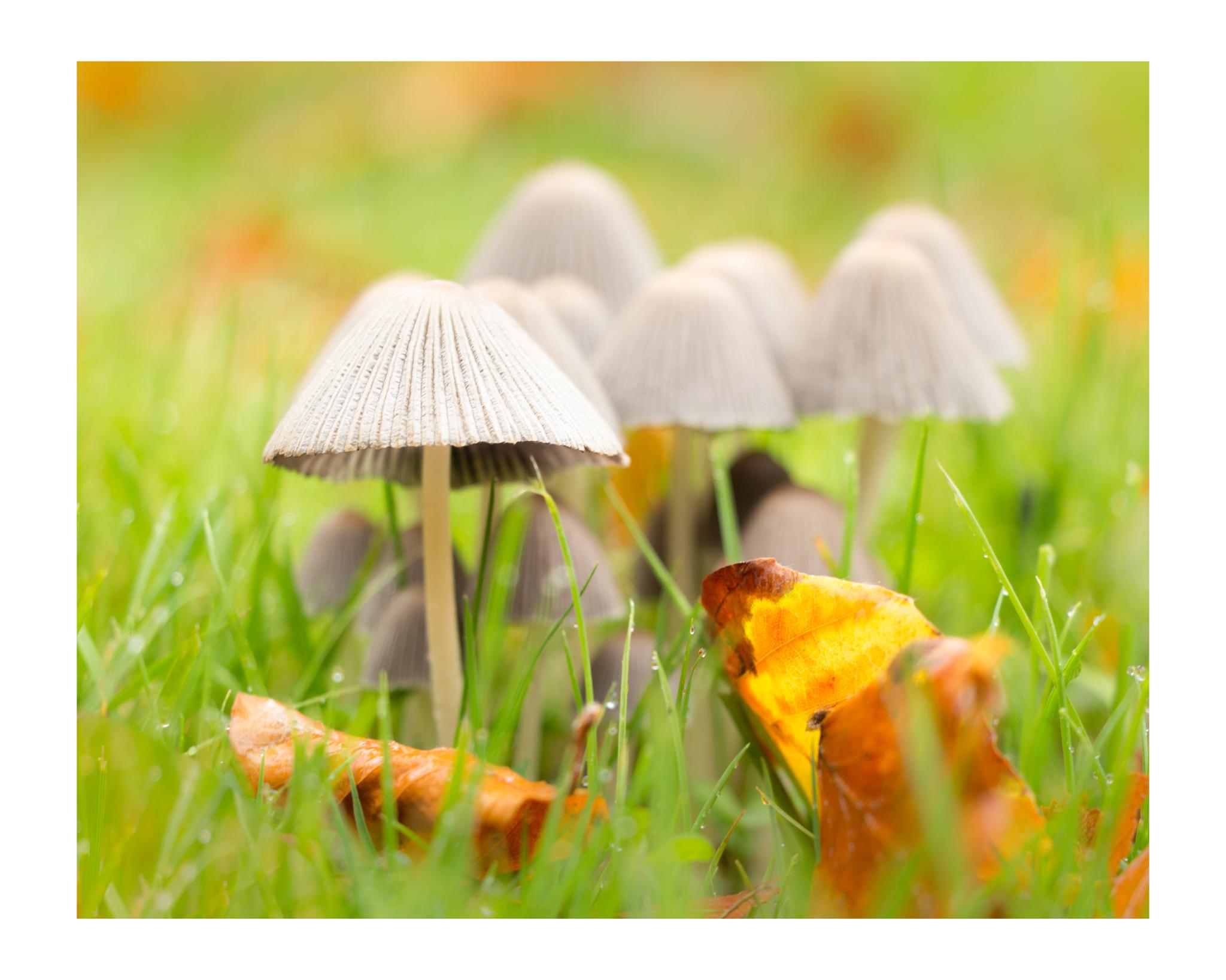 Autumn 3-2.jpg