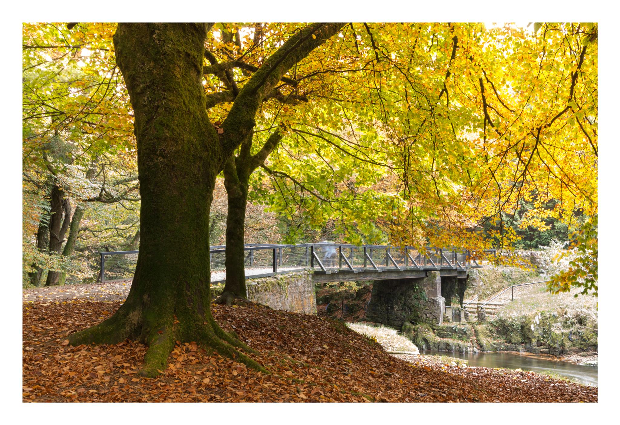 Autumn 4-2.jpg