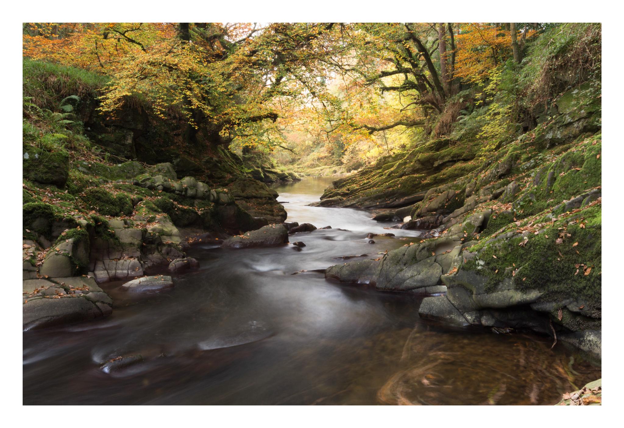 Autumn 8-2.jpg