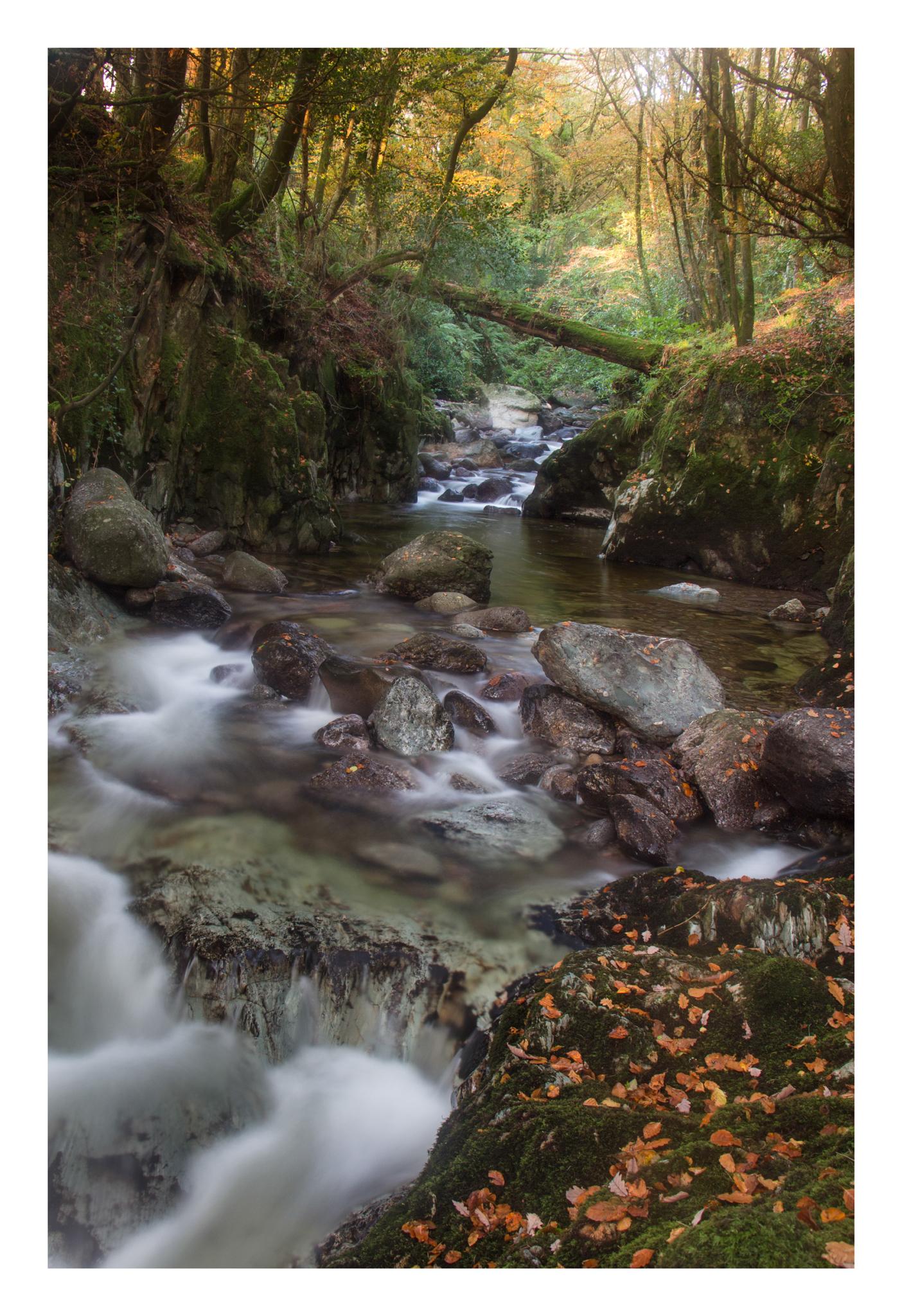 Autumn 11-2.jpg