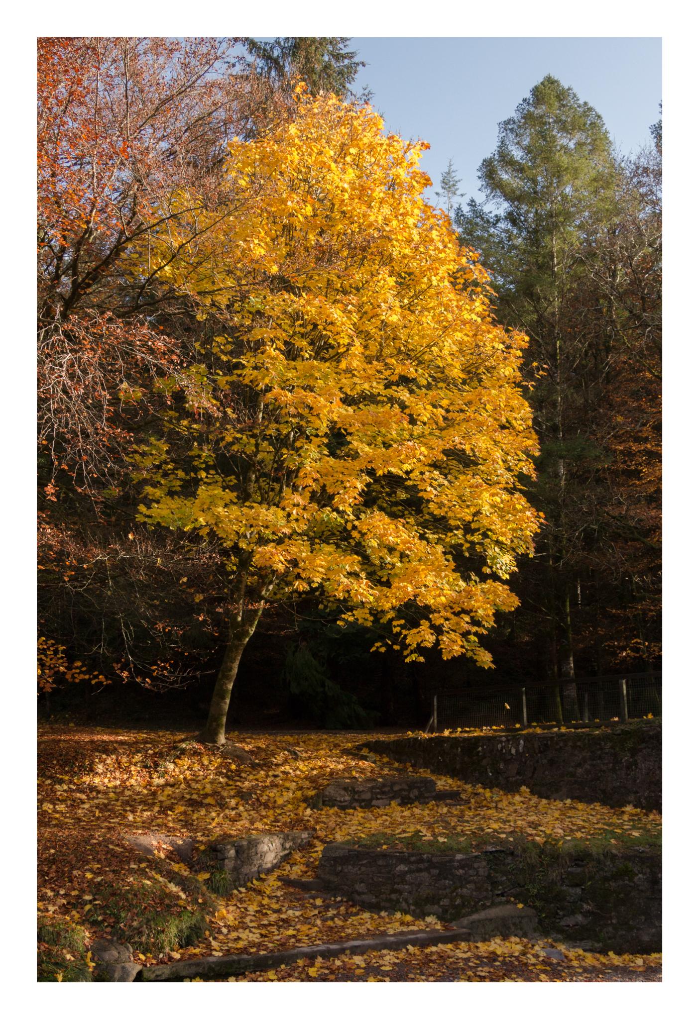 Autumn 14-2.jpg