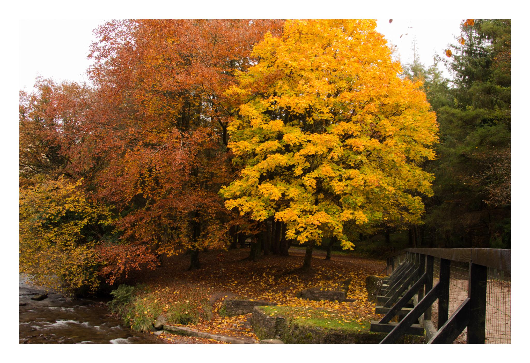 Autumn 15-2.jpg