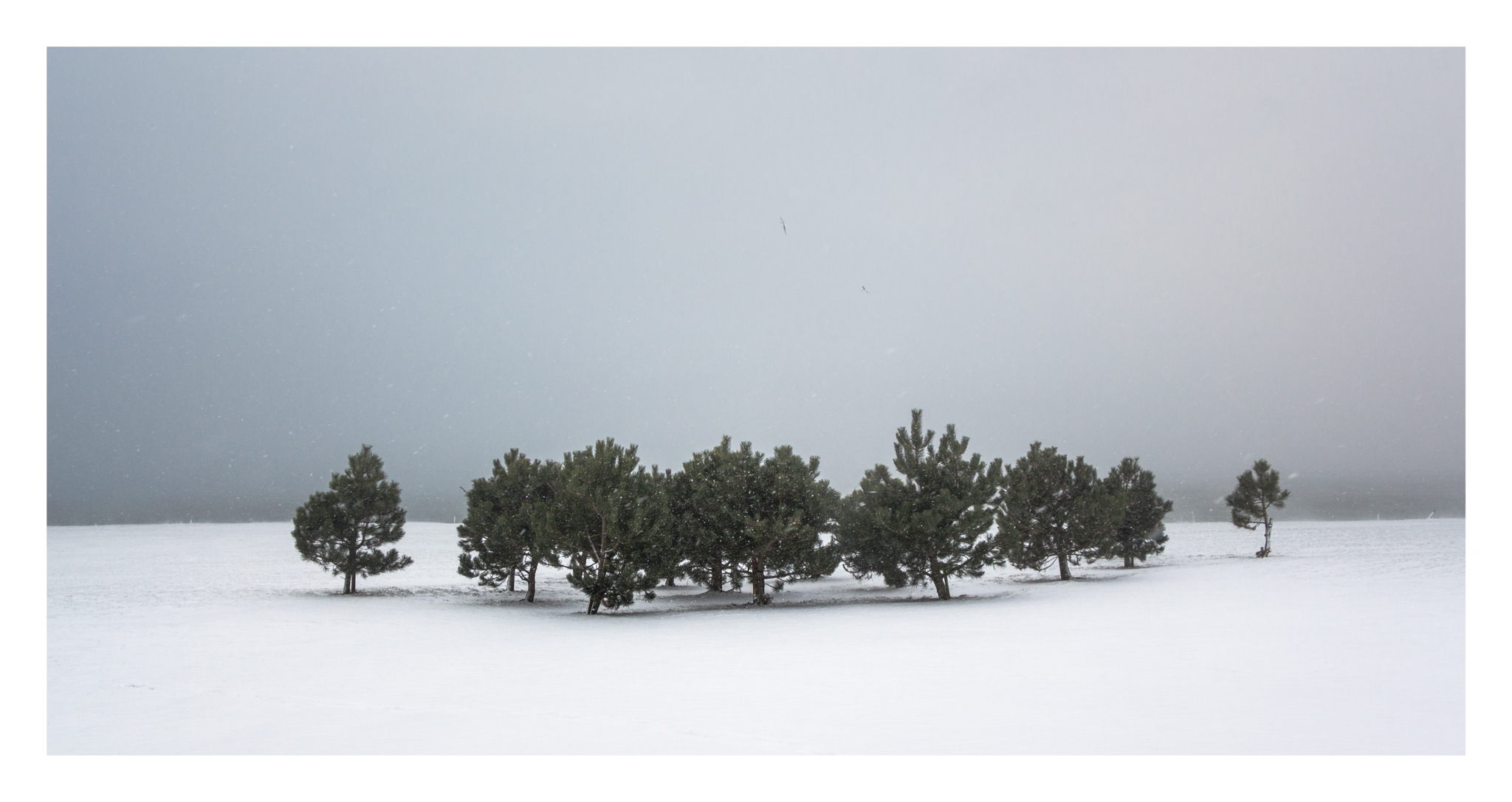 Snow day 4-2.jpg