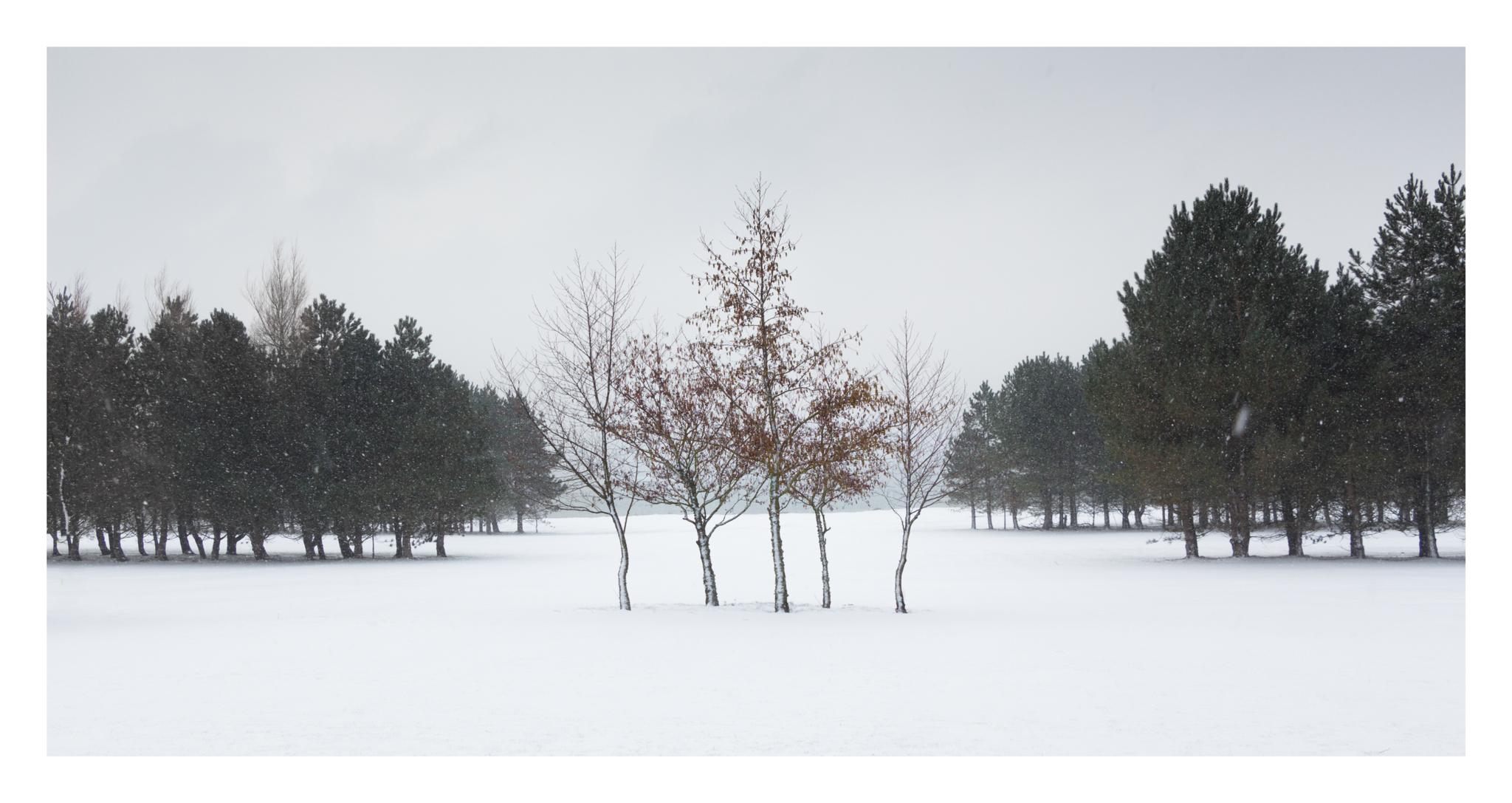 Snow day 5-2.jpg