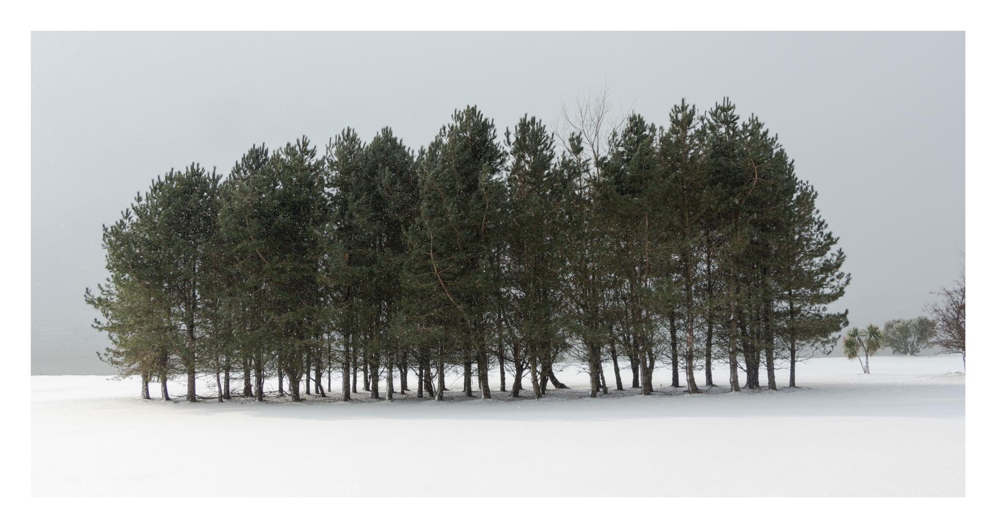 Snow day 6-2.jpg