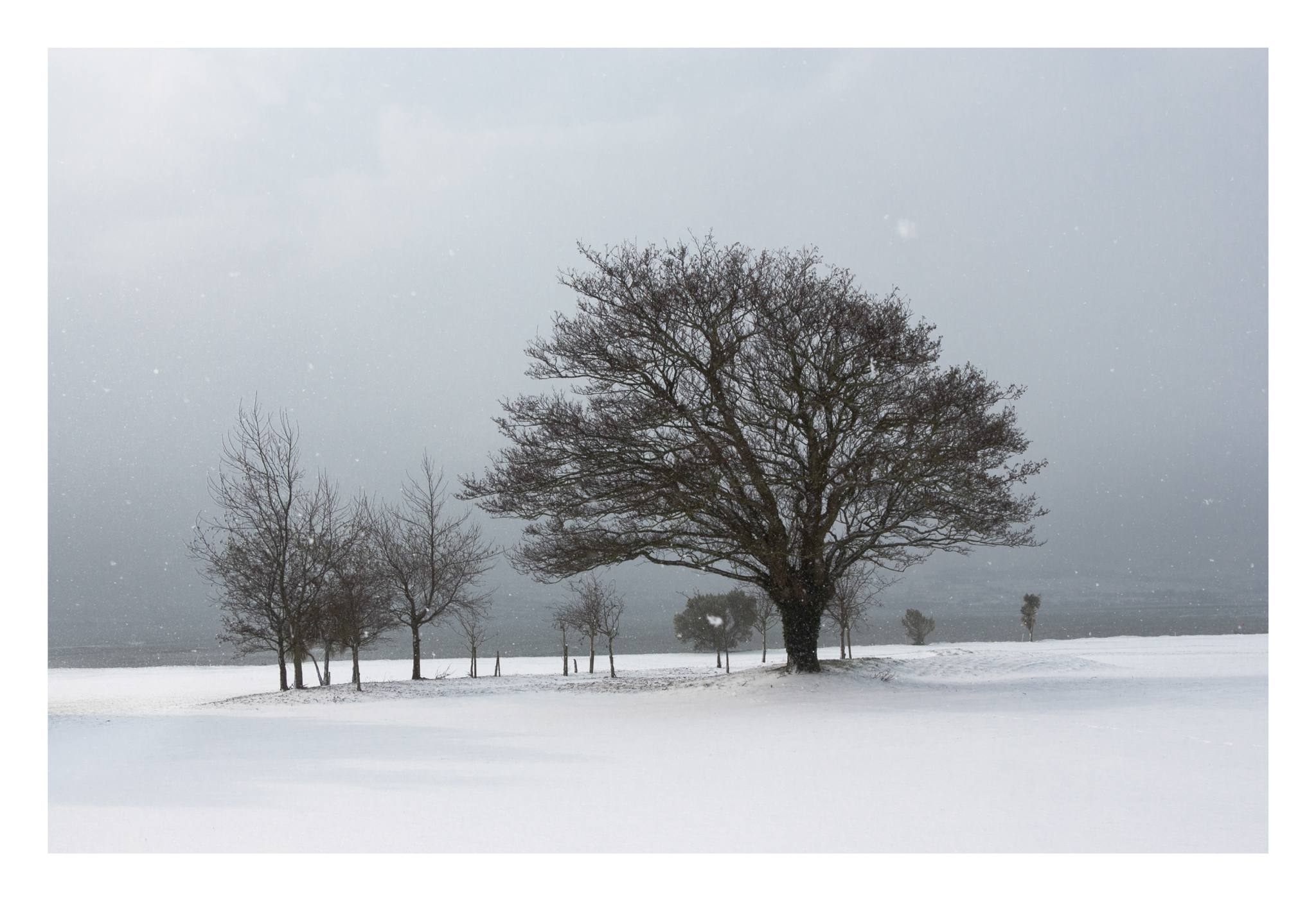 Snow day 7-2.jpg