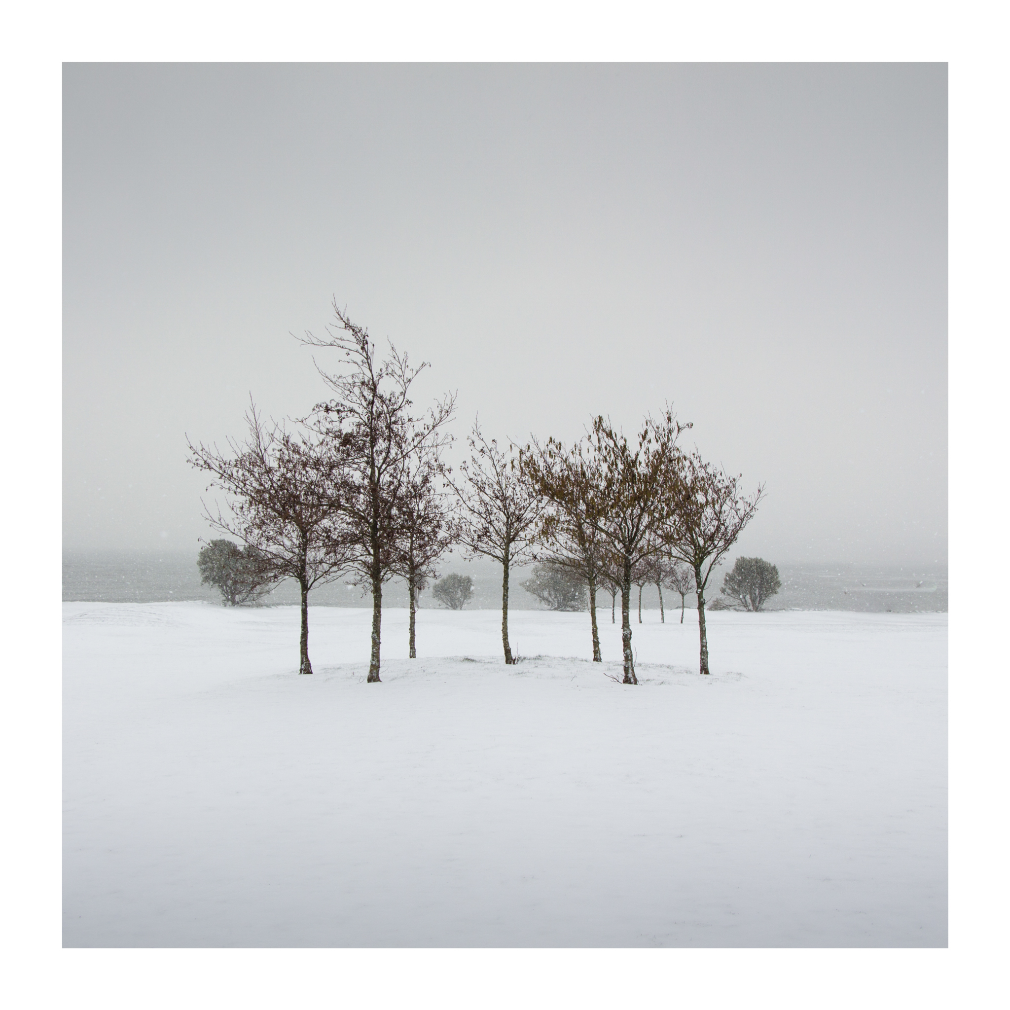 Snow day 8-2.jpg
