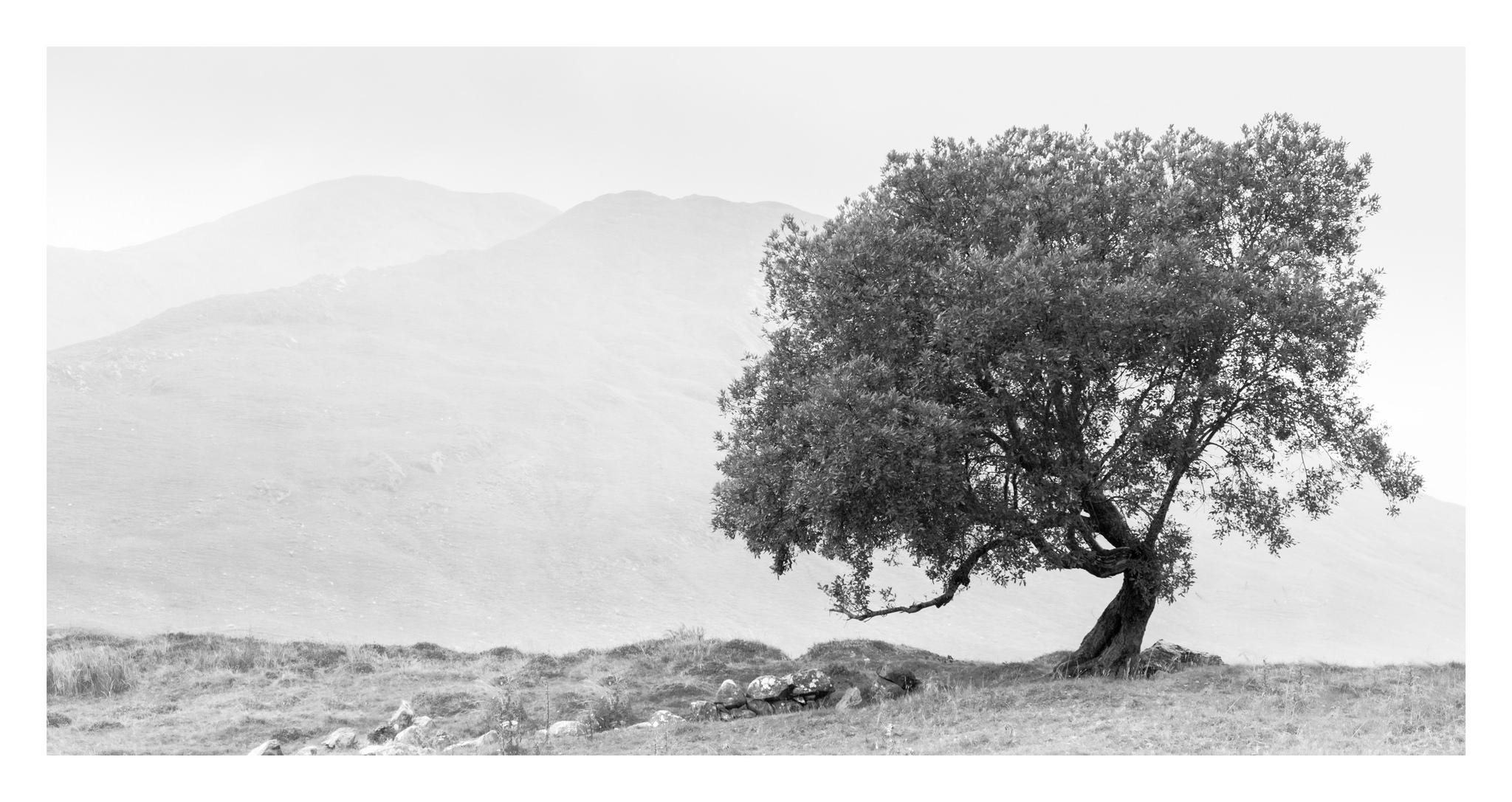 Logh Na fooey Lone tree in Connemara