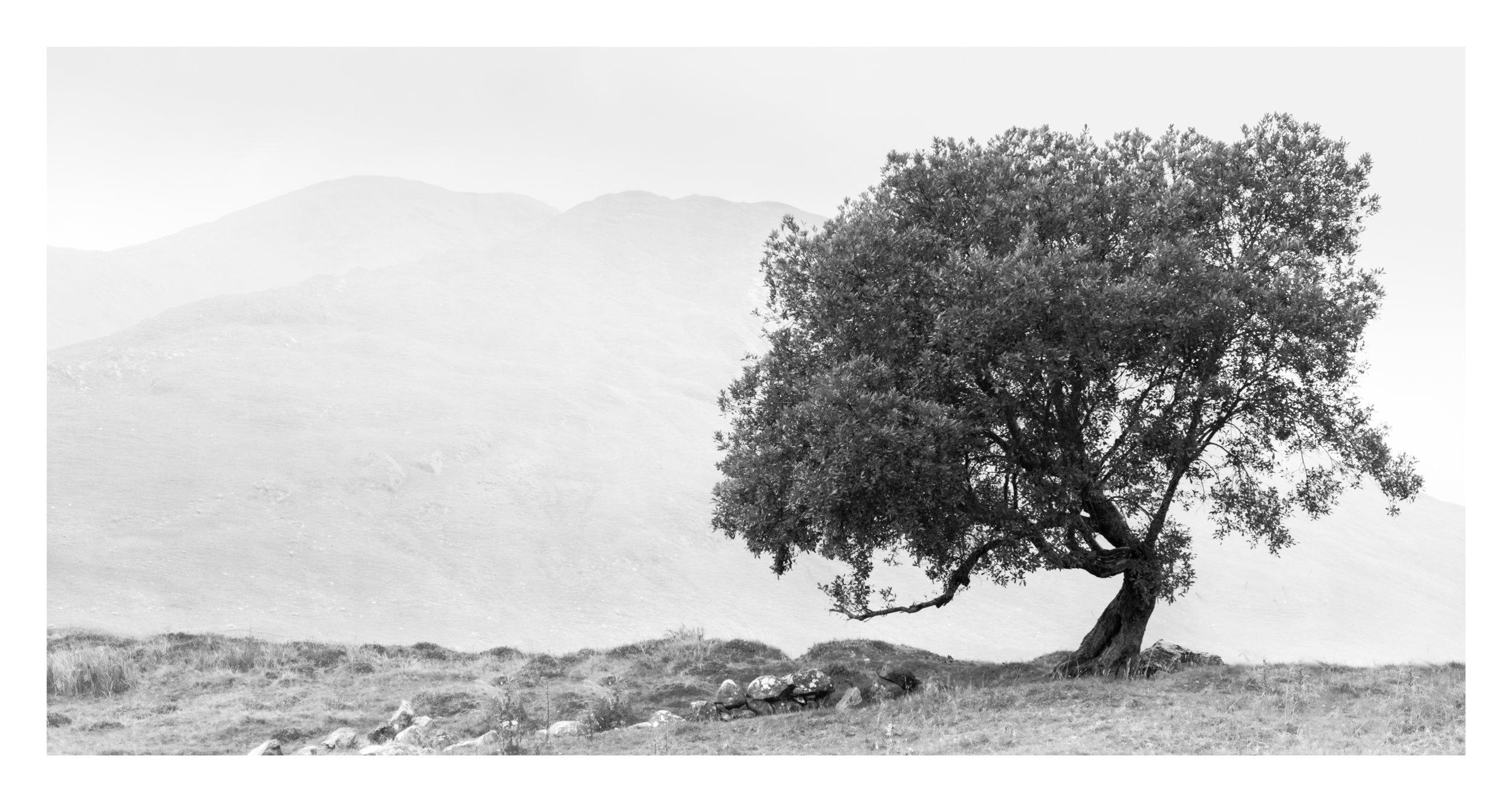 24 Lough naFooey tree.jpg