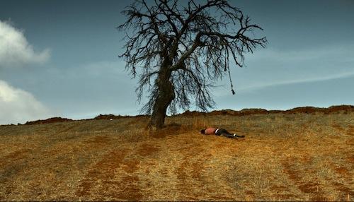 wild-pear-tree-pic.jpg