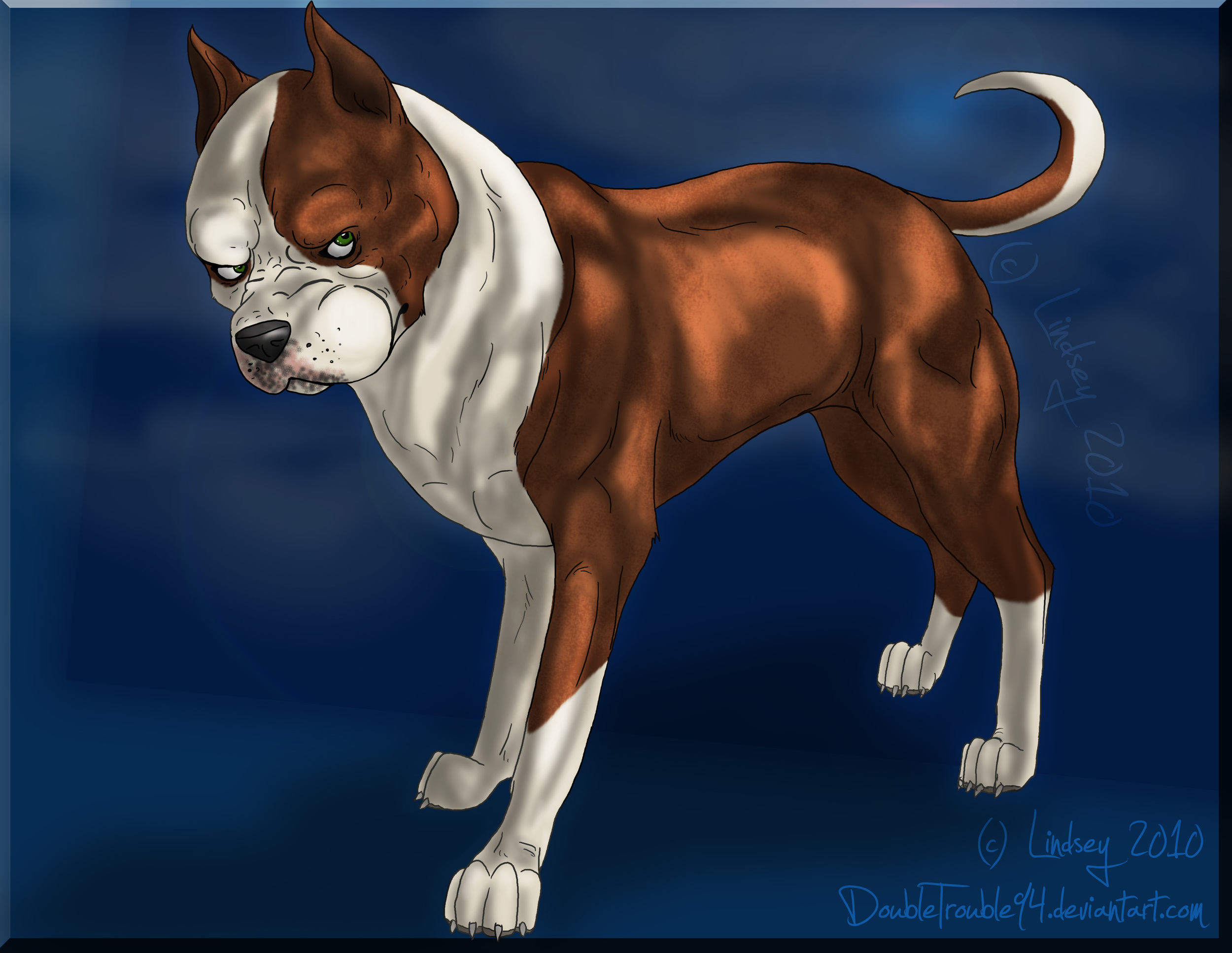 pittbull_drawing_by_doubletrouble94-d32qchi.jpg
