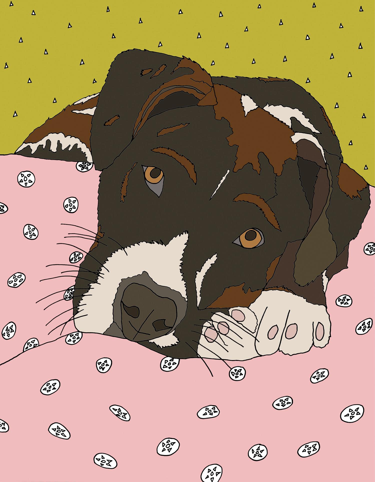 custom portrait illustration meighan otoole dog pet cat nicole stevenson studio.jpg