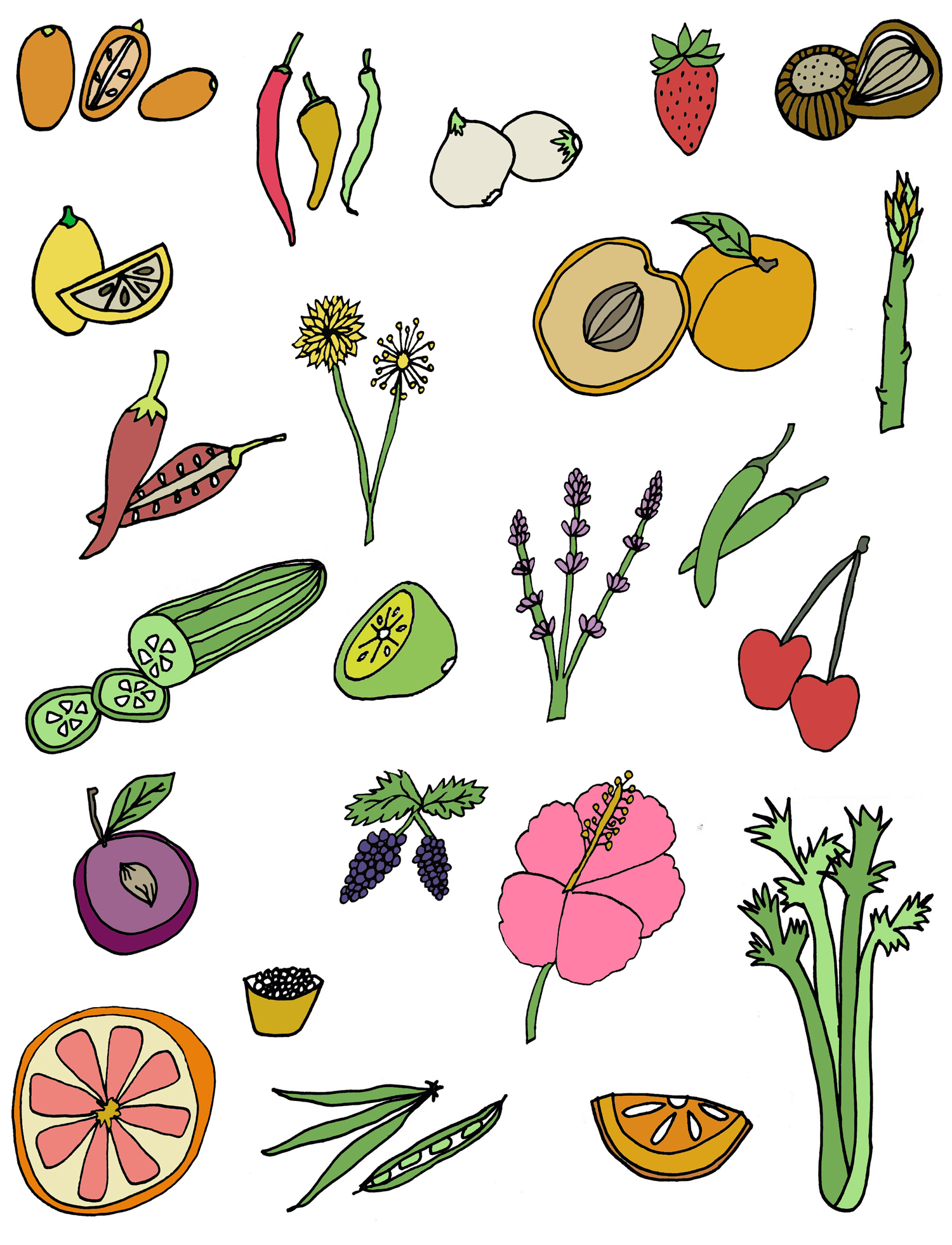 fruit vegetables drawing illustration nicole stevenson studio.jpg