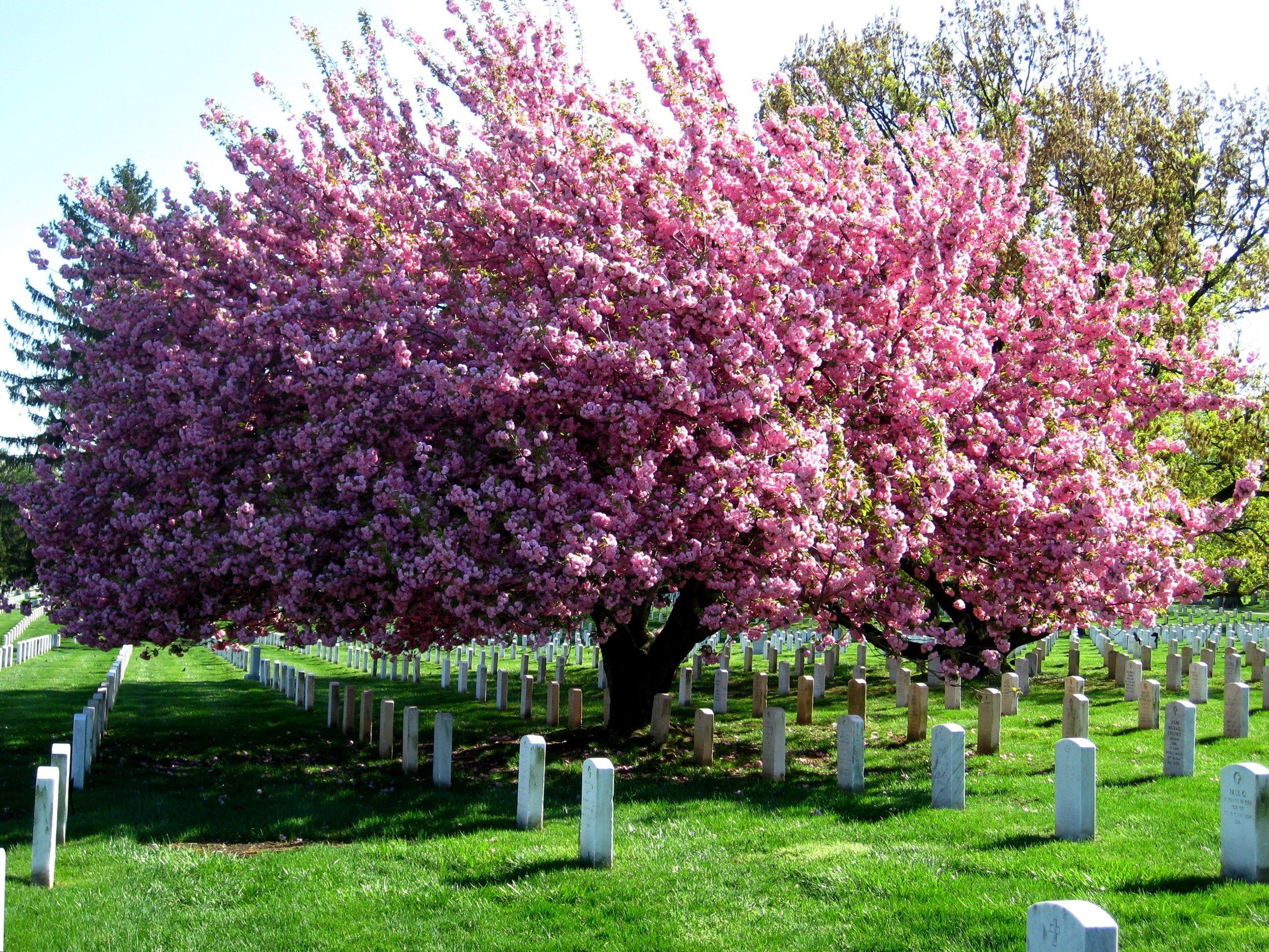 Arbor Tech-Family Tree Burial Service-blog.jpg