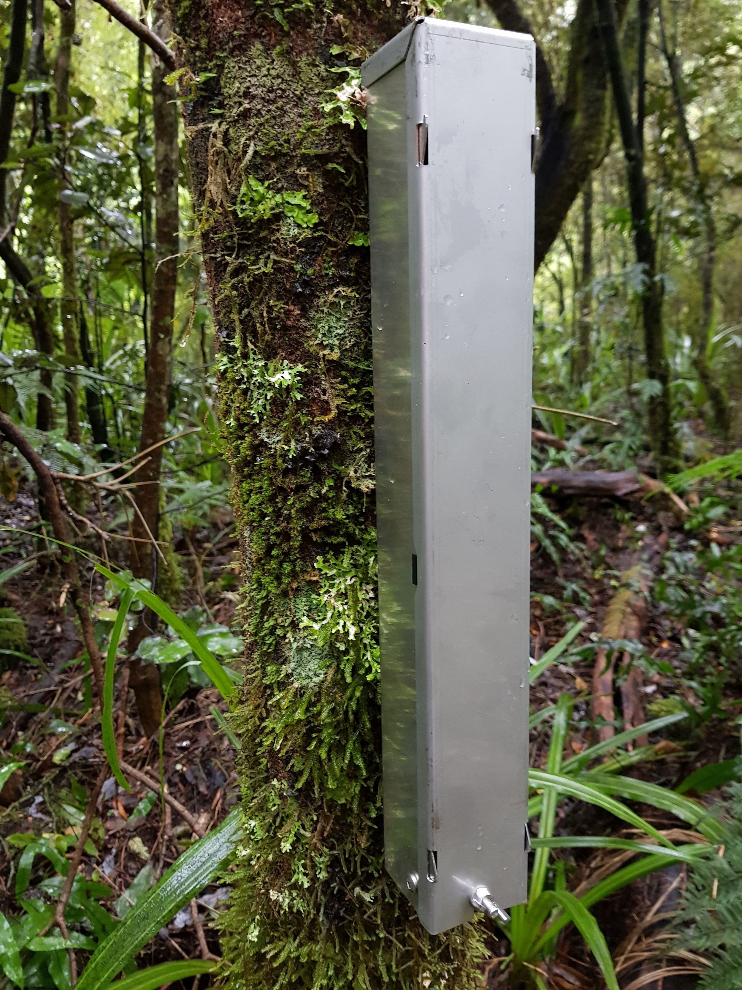 Tree-mounted automated lure dispenser, Perth Valley. Photo on right shows dispenser with cover removed.