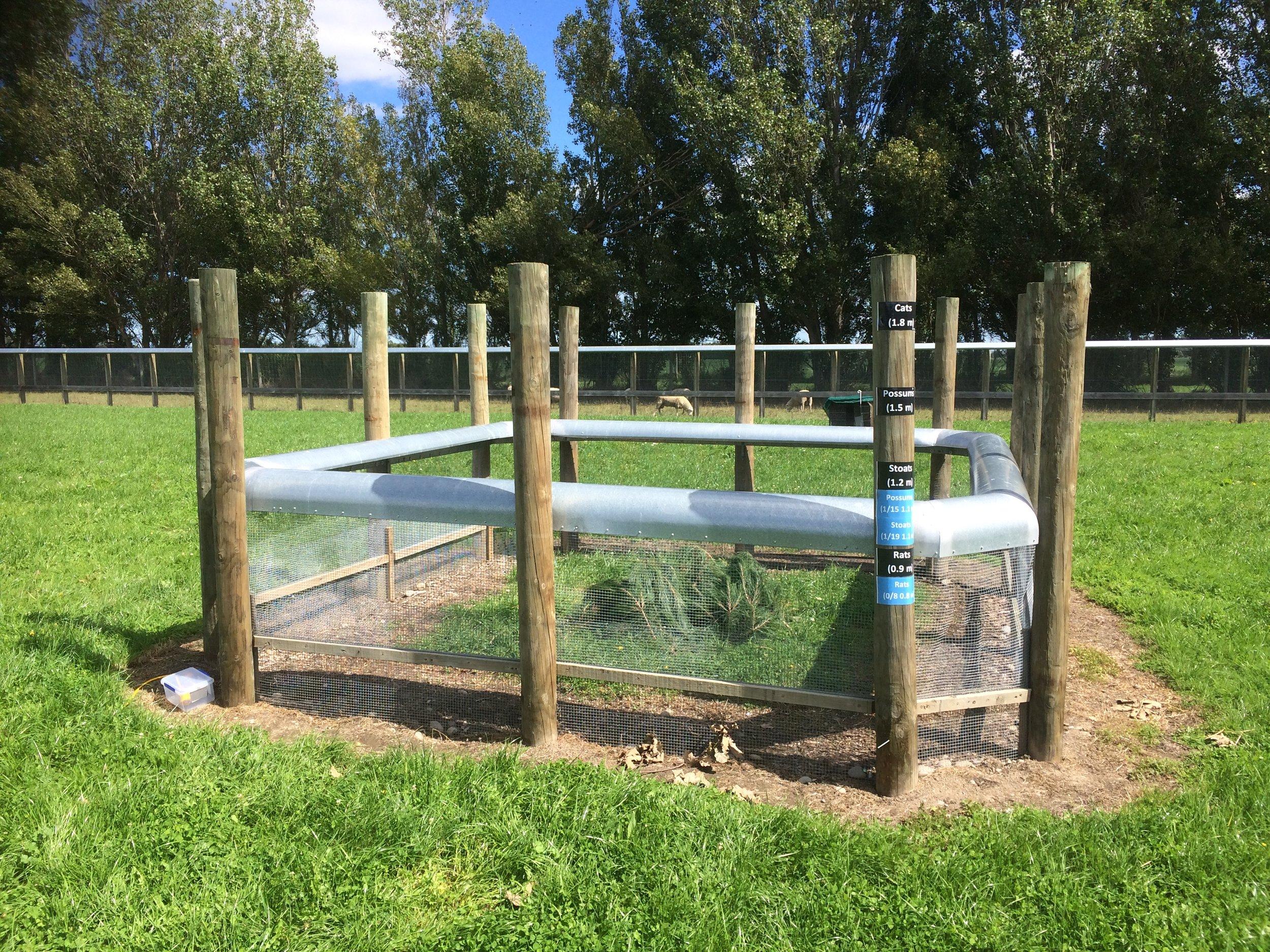 Custom-built 4 x 4 metre testing pen inside ZIP's larger (2 ha) predator-fenced enclosure