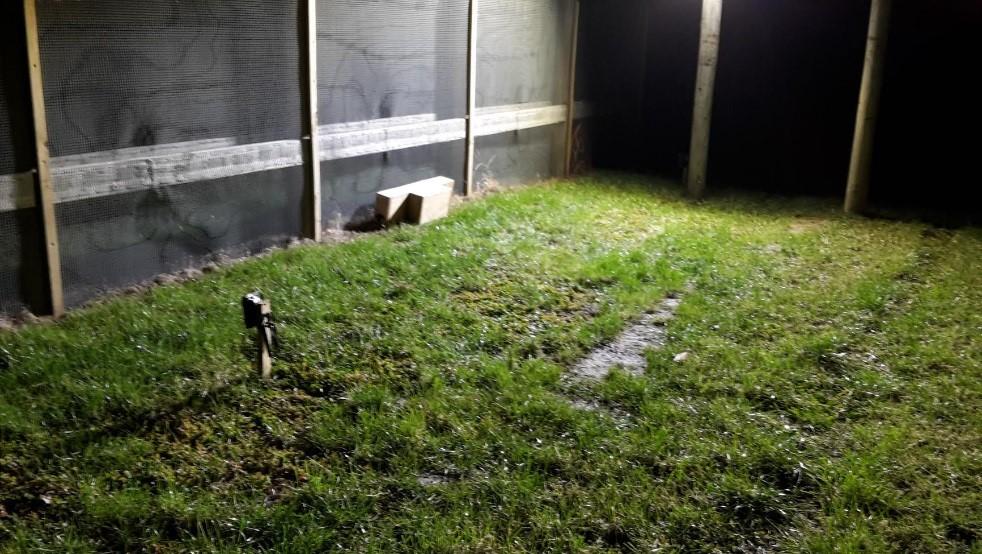 Rat seeking shelter 2.jpg