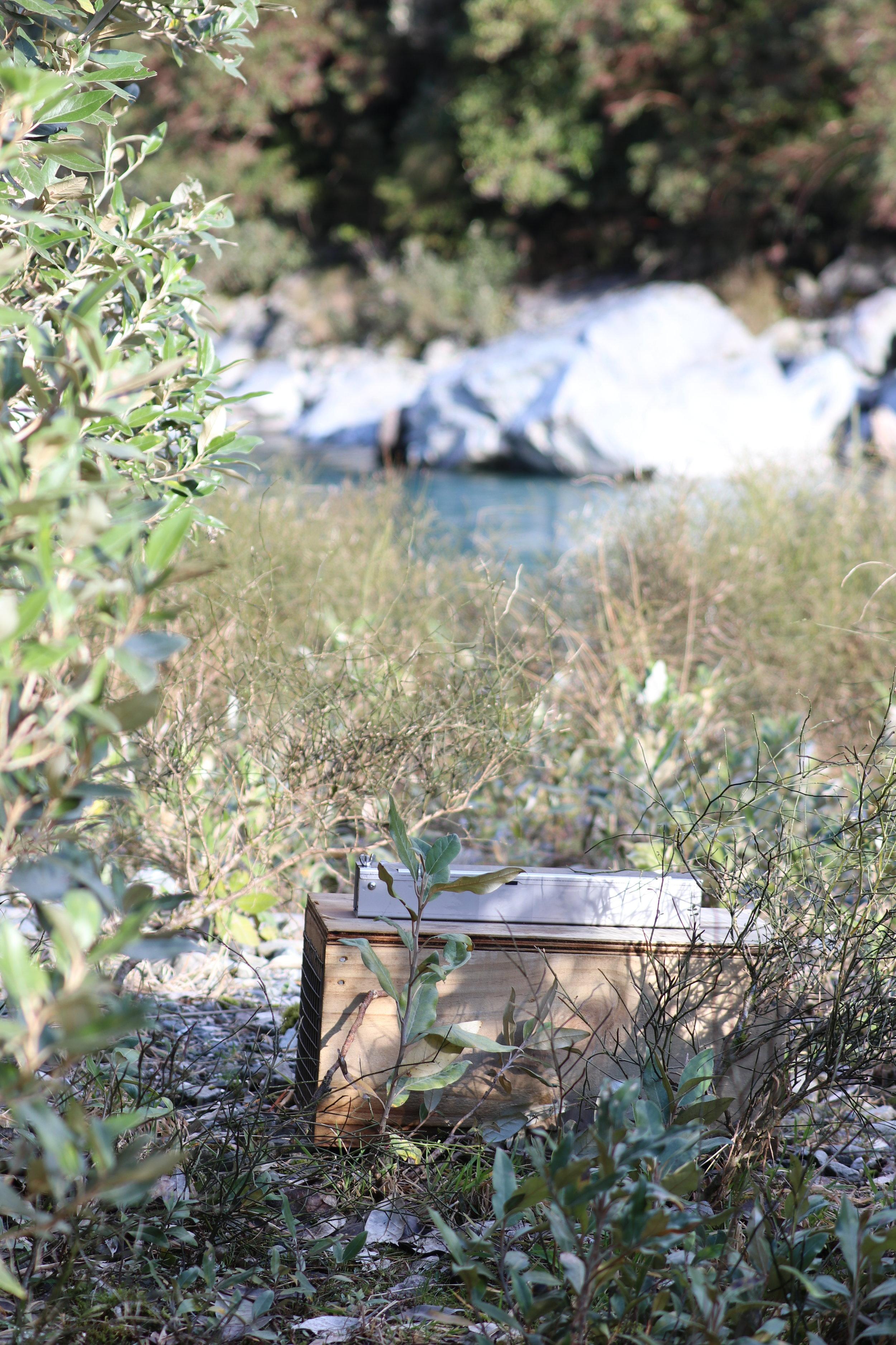 DOC200 trap with ALD on the true right of the Perth River near Elizabeth Stream