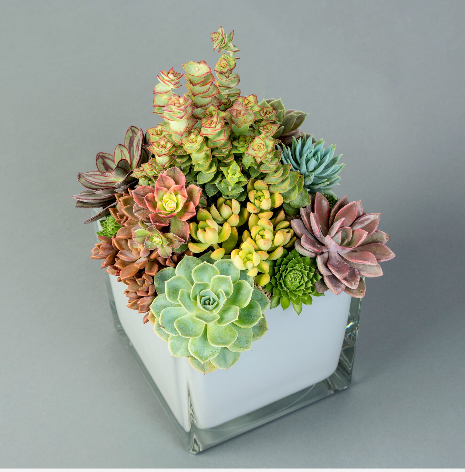 Succulent Garden Southern Blossom Charlotte Florist And Flower Delivery