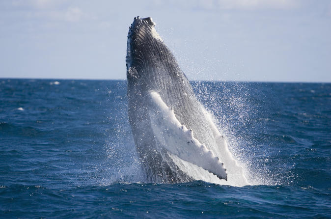 half-day-whale-watching-and-canal-cruise-from-the-gold-coast-in-gold-coast-164070.jpg