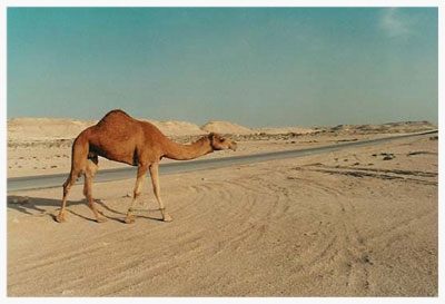 Bahrain-scenes-2.jpg