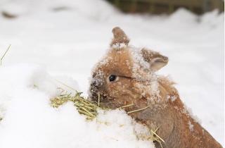 Dott er en glad og aktiv kanin   Foto: Janne Folkenborg