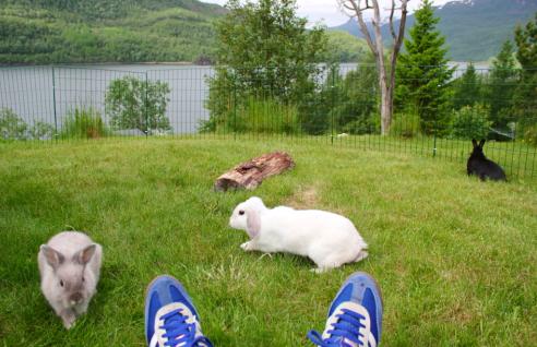 Jeg overvåker bonding av Mia, Milli og Lotte.  Foto: Selfie