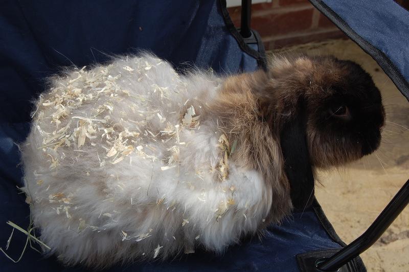 Jenny     Foto: Fat Fluff Rabbit Rescue, UK