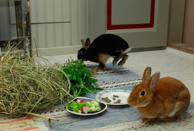 Kaninene illustrerer et godt kosthold  Foto: Katarina Vallbo, Sverige