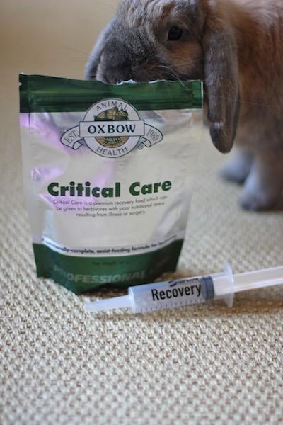 Even viser frem en pakke med Critical Care fra Oxbow og en sprøyte fra Recovery Supreme.  Foto: Marit Emilie Buseth